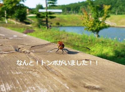 2011_0717_073156-P1100860.jpg