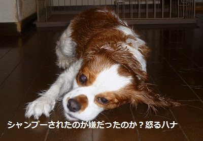 2011_0718_174349-P1100971.jpg