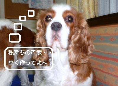 2011_0730_210028-P1110065.jpg