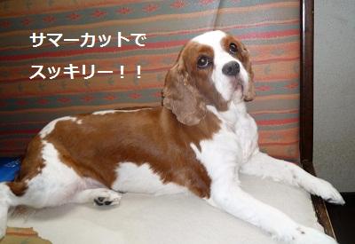 2011_0828_105106-P1110162.jpg