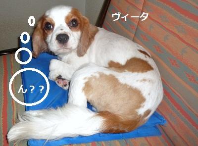2011_0828_133643-P1110170.jpg
