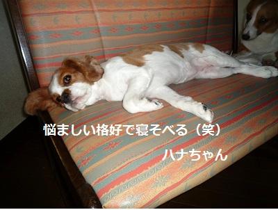 2011_0828_143204-P1110190.jpg