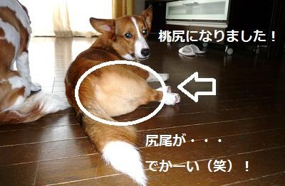 2011_0828_143250-P1110191.jpg