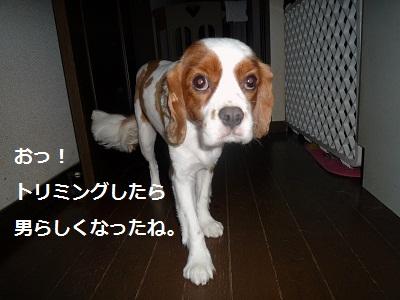 2011_0828_154346-P1110201.jpg