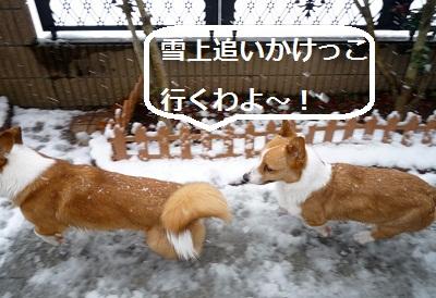 2012_0229_105959-P1130419.jpg
