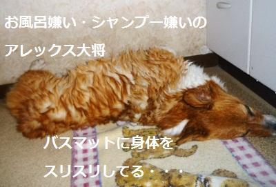 2012_0309_121736-P1130439.jpg