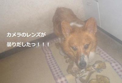 2012_0309_121838-P1130444.jpg