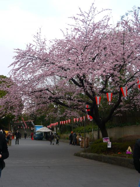 上野の桜 2012 0326