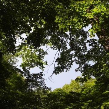 080623見上げた木々
