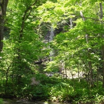 080623森林と滝