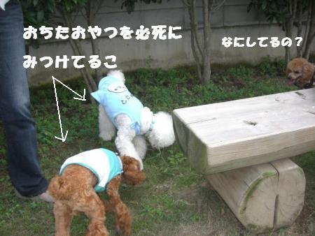 げんちゃんとマッシュ5