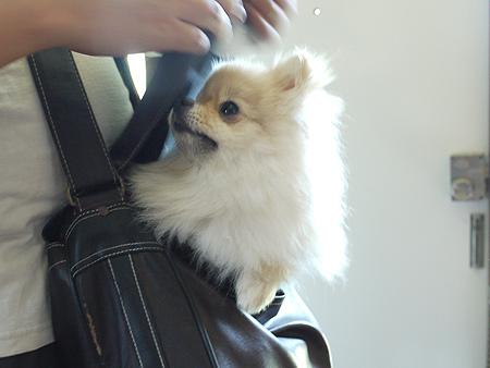 2009/8/25 パパの鞄3
