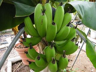 banan1gou1107 1