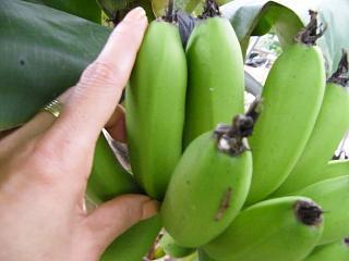 banana1gou1107 2