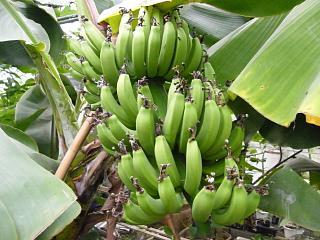 banana2gou1107