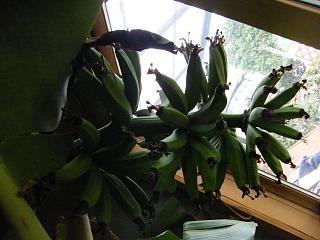 banana3gou1107.jpg