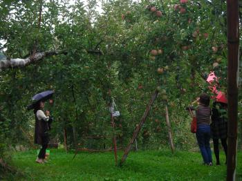 雨の中のりんご狩り