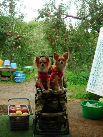 天龍峡農園の本日の来園犬