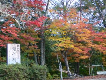 今村公園の紅葉