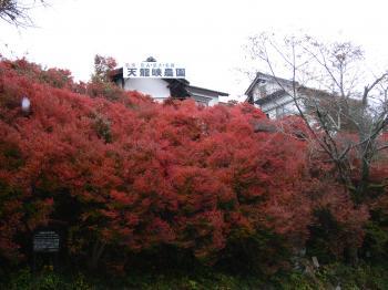 天龍峡農園前のどうだんつつじの紅葉