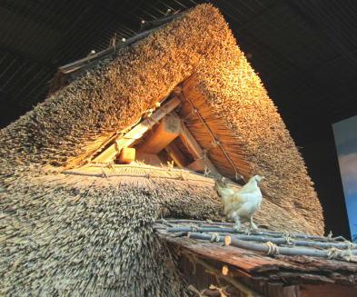 ニワトリと竪穴式住居