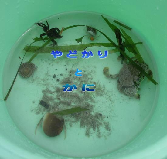 IMG_6935-kani.jpg