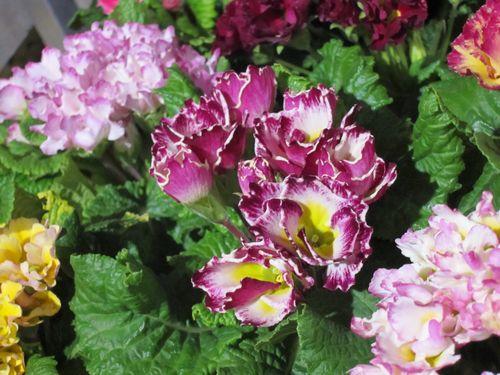T's Garden Healing Flowers‐ジュリアン・ベルローサ