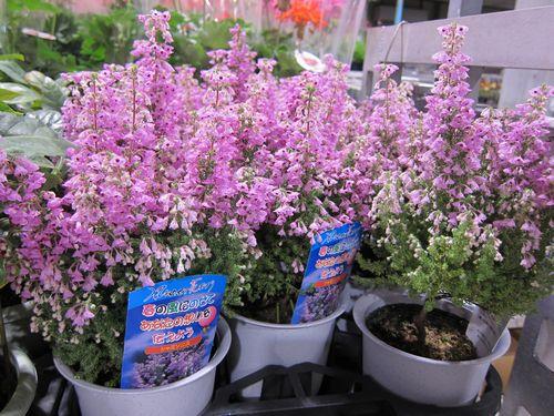 T's Garden Healing Flowers‐エリカ・シャミソニス