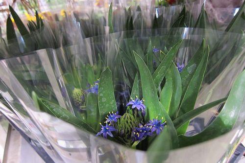 T's Garden Healing Flowers‐シラー・星のソナタ