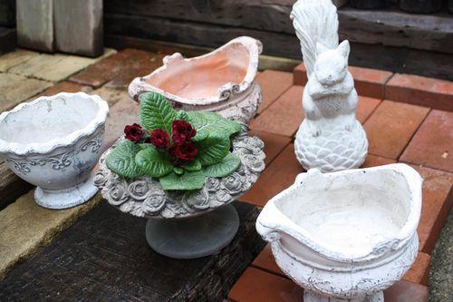 T's Garden Healing Flowers‐新入荷の鉢たち
