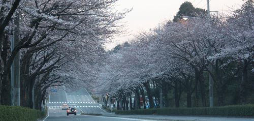 T's Garden Healing Flowers‐桜並木