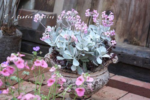 T's Garden Healing Flowers‐カランコ・白銀の舞寄せ植え