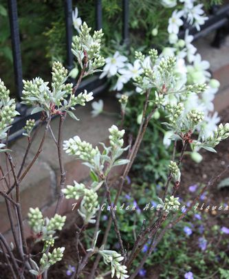 T's Garden Healing Flowers‐花壇の植え込み仕事