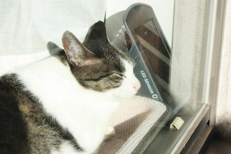 太陽光蓄電中