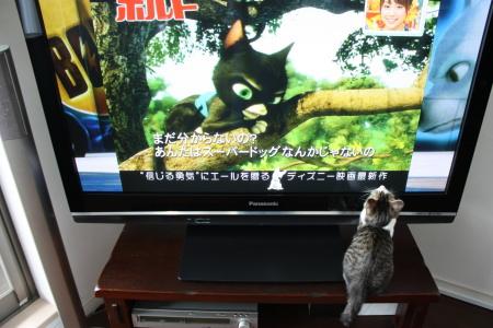 アニメの猫か・・・