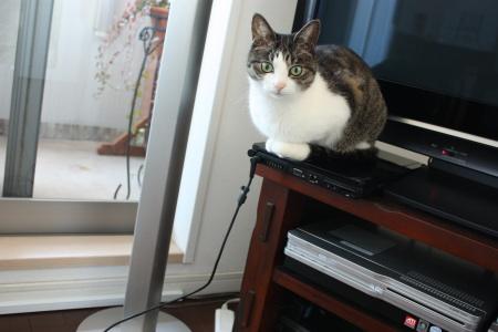 猫はPCに乗りたがる