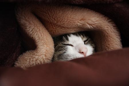 あなたはだんだん眠くな~る・・・・