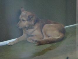041洋犬