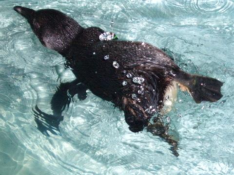 2008822ペンギン