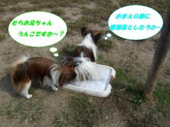 10-01_20081012200807.jpg