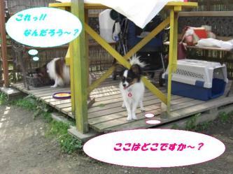 10-04_20081012200913.jpg