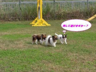 10-11_20081012203850.jpg