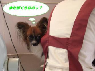 12-09_20081014105359.jpg