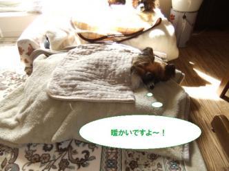 25-04_20110325130848.jpg