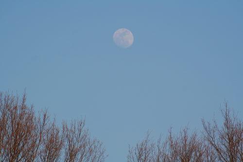 旧暦14日の月