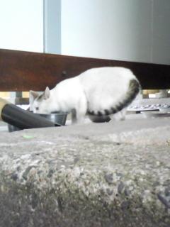 お食事猫さん