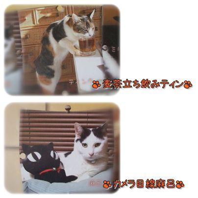 ティン&麻呂1