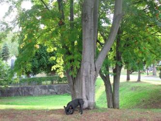8月28日ナナカマドの木