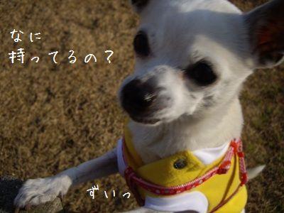騙される犬1