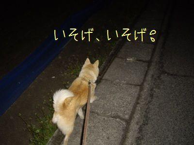 最近の夜散歩5